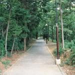 八ツ池からグリーンロッジへの山道