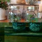 9/20(日) いるまアウトドアフェアで多肉植物の寄せ植え体験できます!![終了しました]