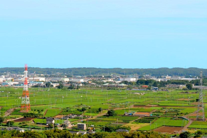 桜山展望台から望む茶畑
